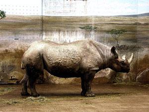 brookfield zoo pachyderm house
