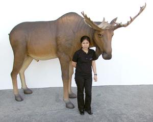 life-size moose